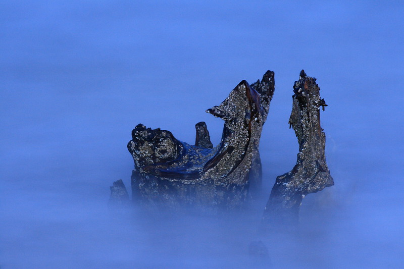 Barnacle-encrusted stump in the ocean. Grandview Nature Preserve, Hampton, VA. © 2007 Kenneth R. Sheide