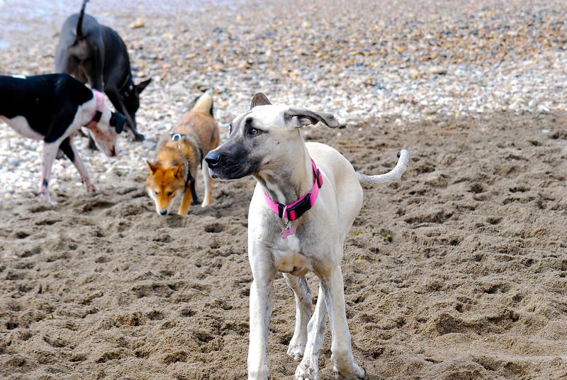 dogs_beach-020.jpg