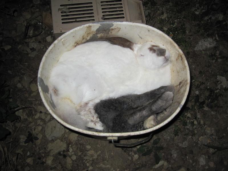 07-lapins-morts-France-2008-2010.jpg