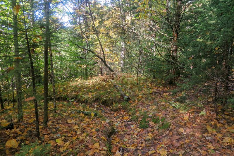 Little East Fork Trail -- 5,320'