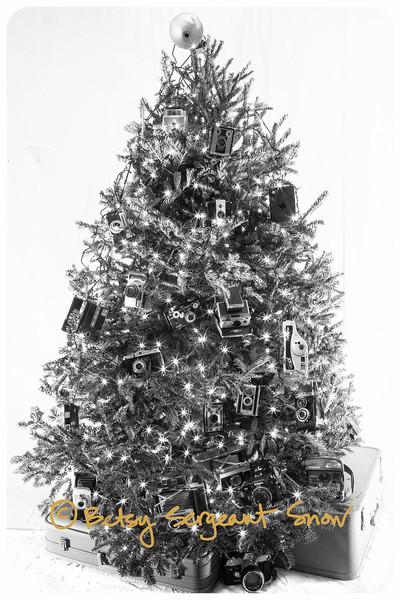 Camera TREE 2012