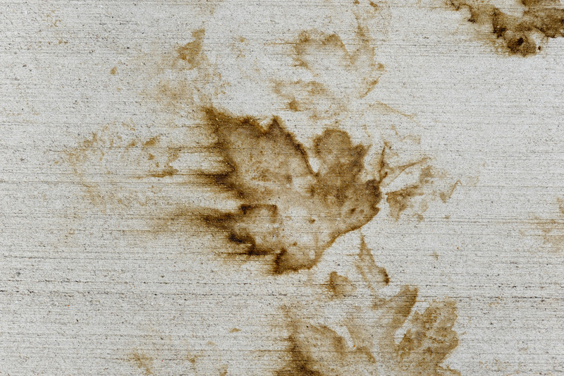 Leaf-6887.jpg