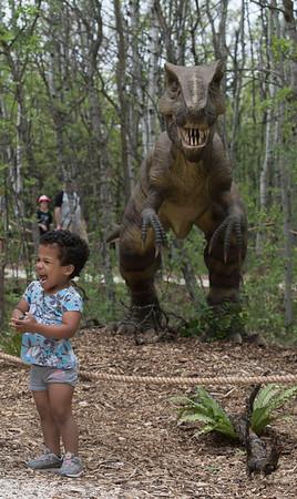 DAVID LIPNOWSKI / WINNIPEG FREE PRESS  Five-year-old Alissa Wilder checks out the Yangchuanosaurus at the Dinosaurs Alive! exhibit at the Assiniboine Park Zoo Sunday May 22, 2016.