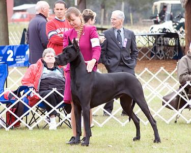 Central Florida Dog Shows - 2008