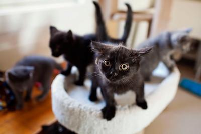 QAC Adoptable Pets - Feb 2013