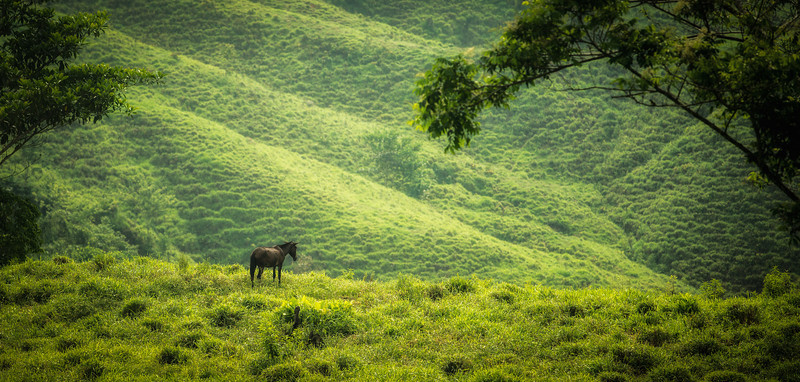 Lonesome Horse & the Sierra Nevadas