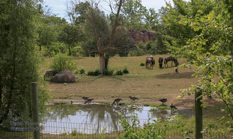 2016-07-17 Fort Wayne Zoo 369LR.jpg