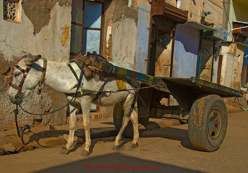 India2010-0204A-367A.jpg