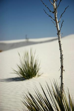 New Mexico & Arizona (2007)