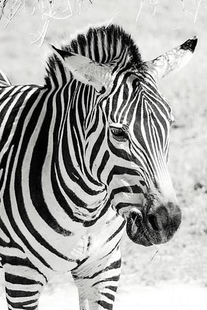 NJ-Cape May Zoo