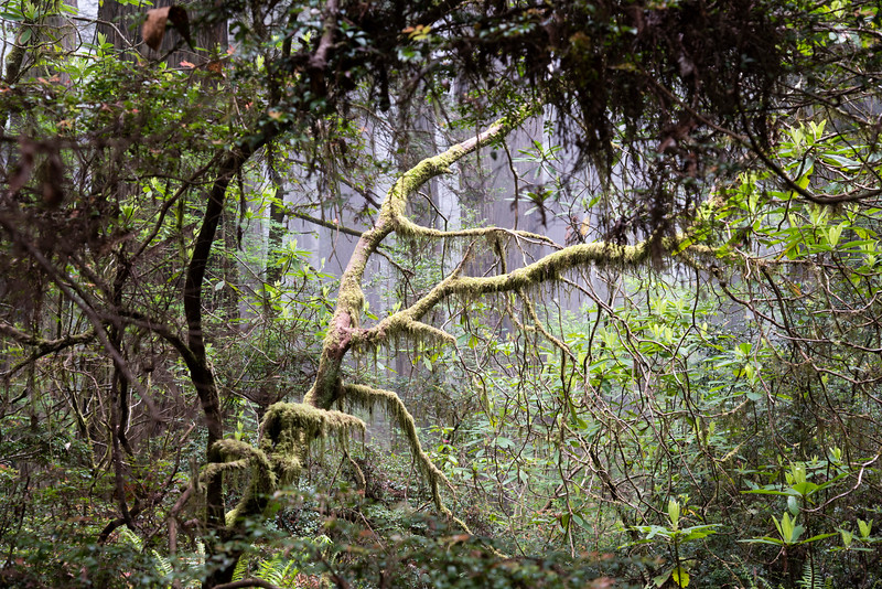 redwoodsFin29-1217.jpg