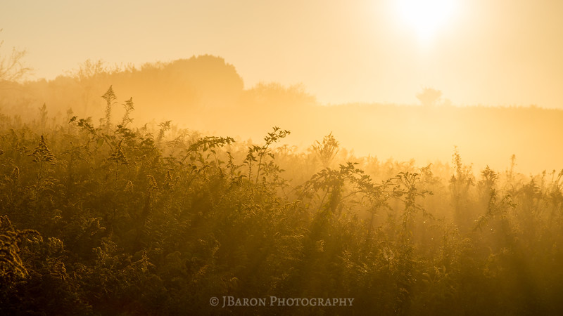 Sunrise over a Field of Goldenrod II