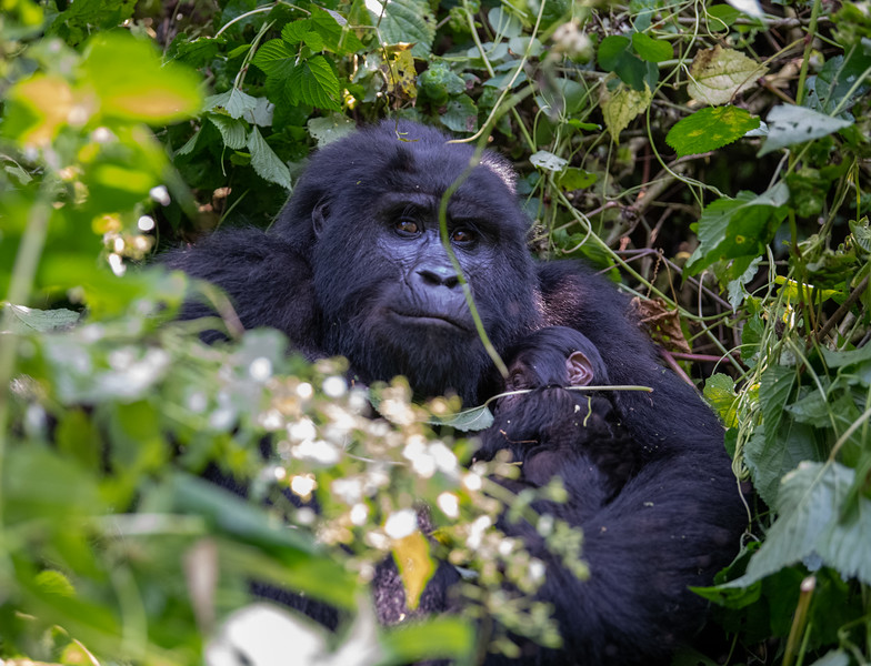 Uganda_T_Gor-983.jpg
