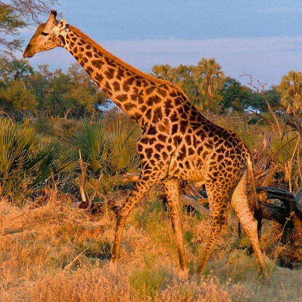 Africa 2004-16.jpg