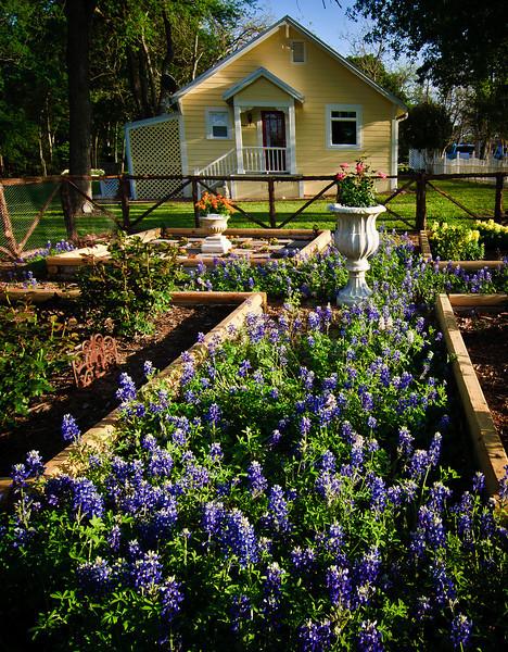 Bluebonnet garden-7727.jpg