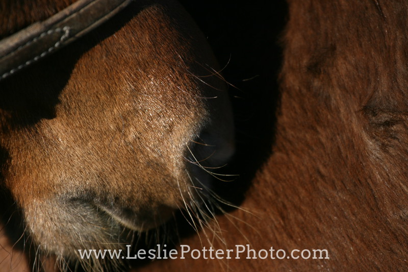 Closeup of Horse Muzzle