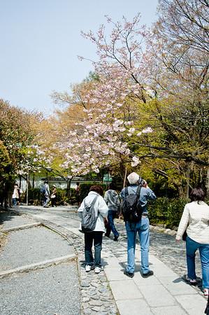 Kyoto, Ryoanji - April 18, 2010