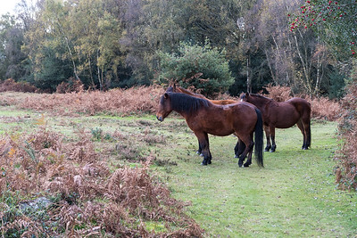 New Forest