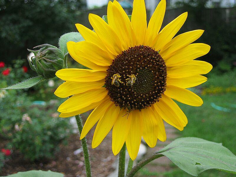 garden-2004-08-0220_std.jpg
