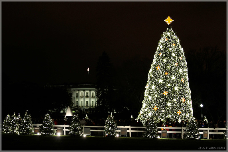 The tree and the White House.