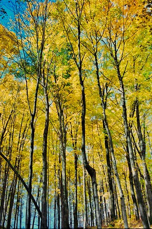 Pennsylvania Fall 2000