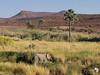 Desert Elephant at Palmag