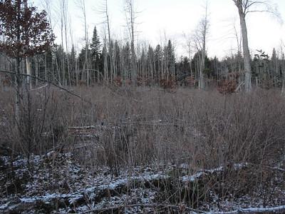 Hunting 2010