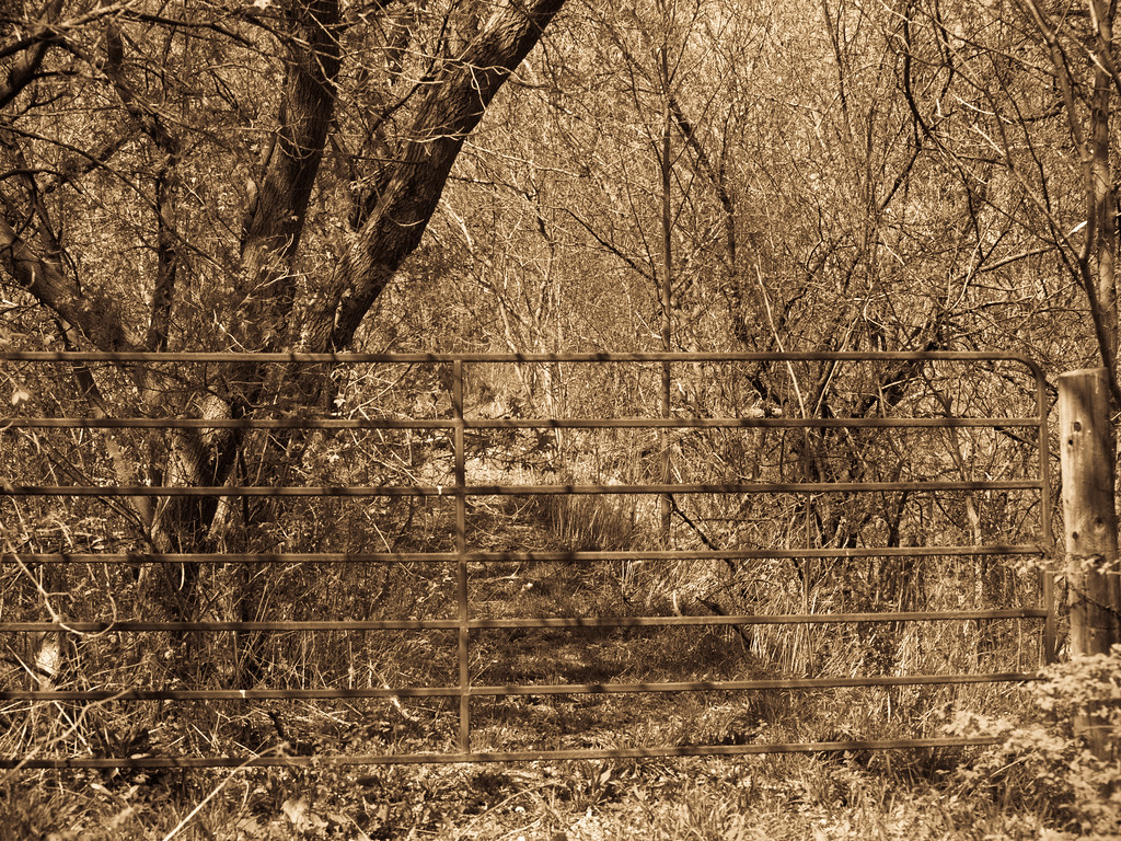 The natural shadows and light are awesome on this trail. Here is the new gate on the old road near Paris Ontario.
