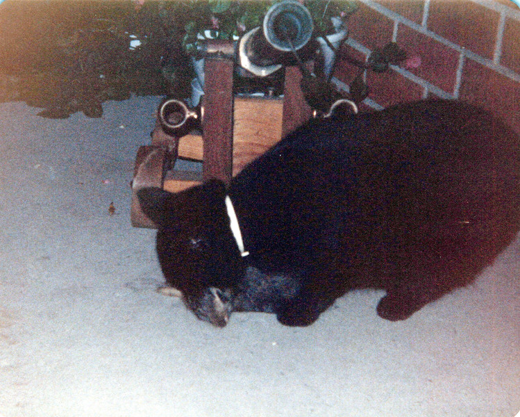 1980 never take a picture of a black cat at night.jpeg
