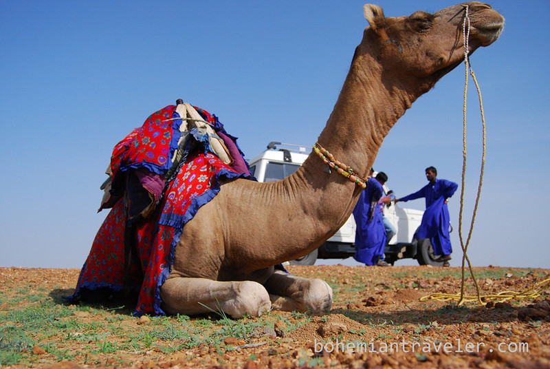 camel restng before trek (2).jpg