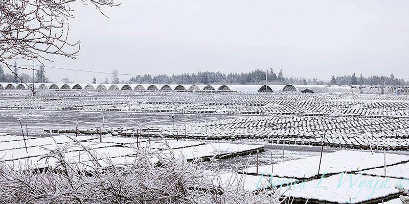 can yard in snow_4215.jpg