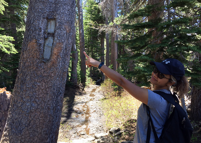 trail blazer.jpg