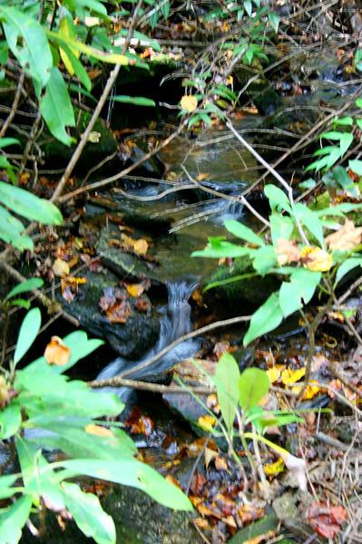 Pisgah Forest 9-30-12 39.jpg
