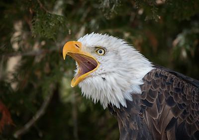 Canadian Raptor Conservancy 2017