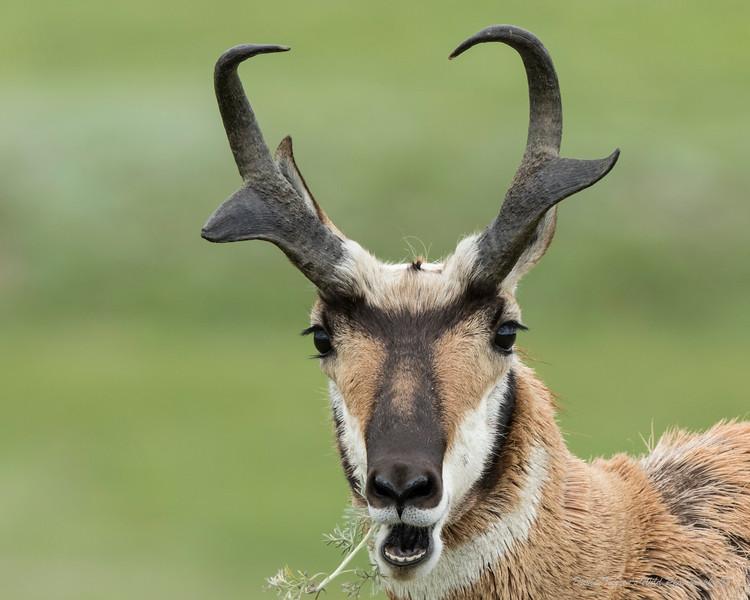 Antelope's Snack_GM1A3537.jpg