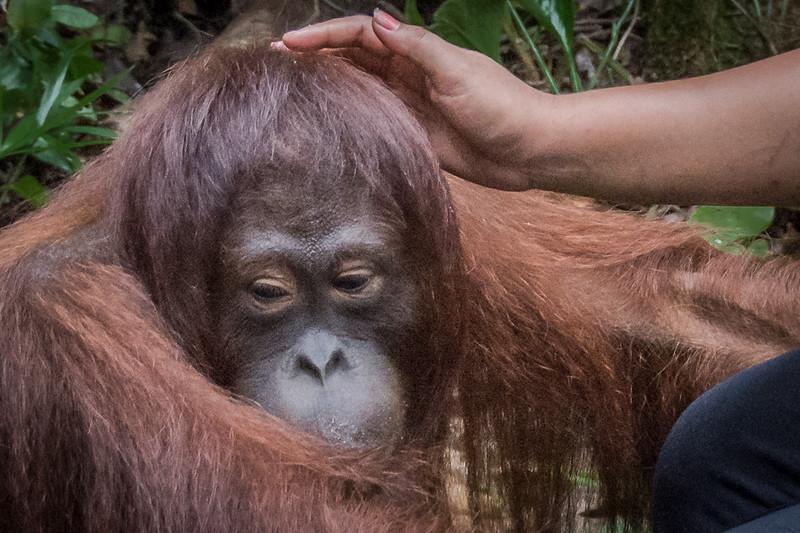 Borneo-2238.jpg