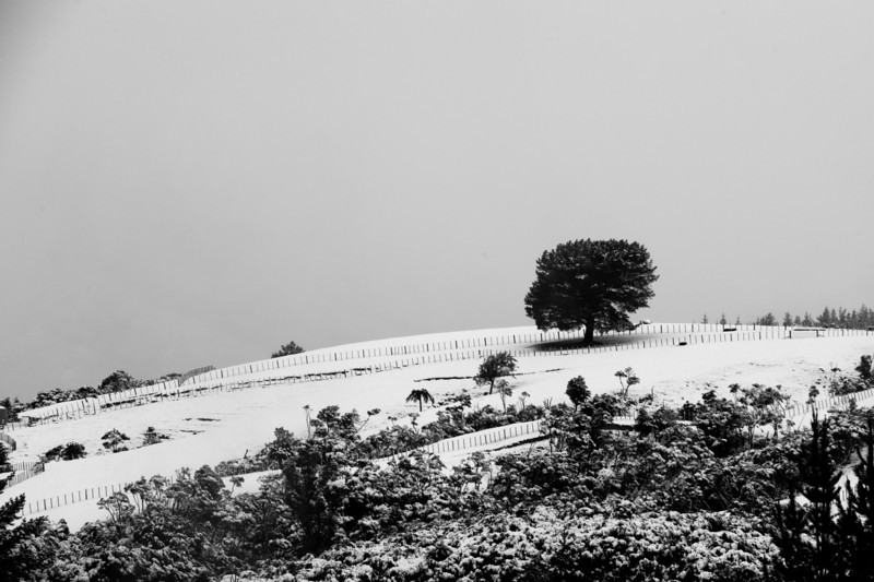 SnowInWelly12568.jpg