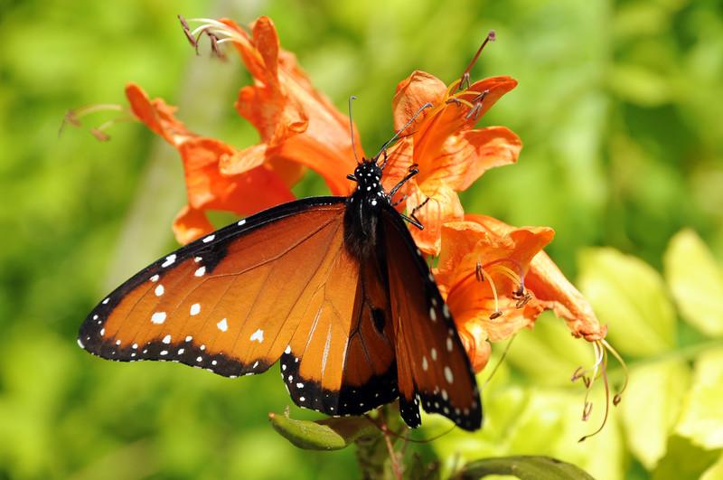 20101202_Nature_045.jpg