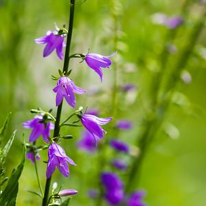 unknown flower-41