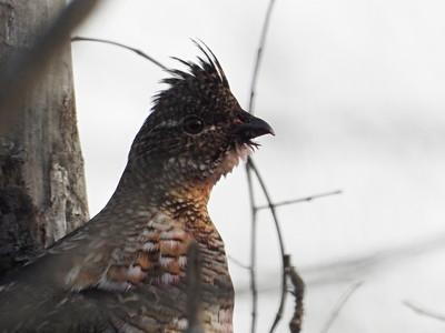 20191228 KFN Birding