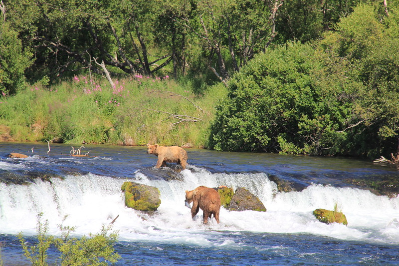 20160713-209 - Katmai NP-Brooks Camp-Two Bears at Brooks Falls.JPG