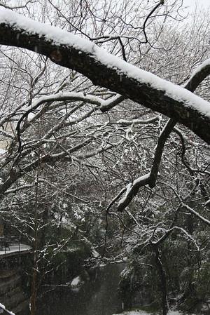 2010 Feb 11 Dallas Snowfall