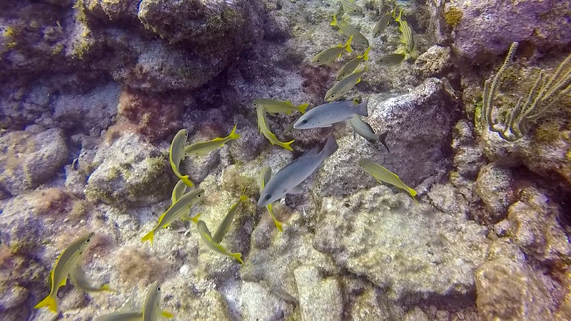 Ciesla-GOPR7718 - KC - Yellow Fish.jpg