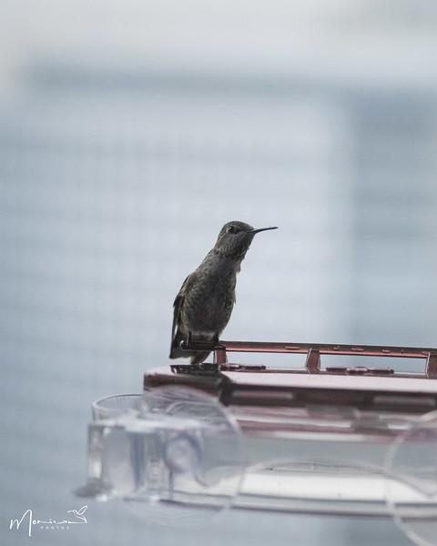 2021 - The Hummingbird Chronicles-0328_edit-2.jpg