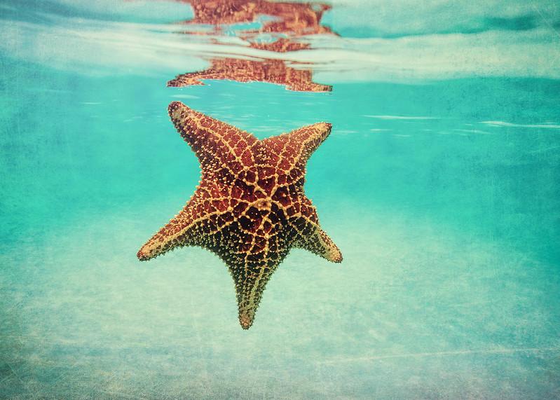 Topsail Island  starfish Photos.jpg