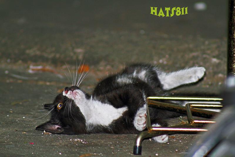 kitten1 copy.jpg