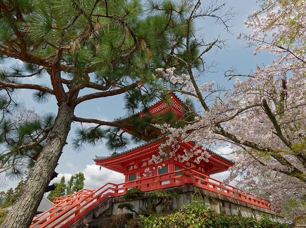 Daikaku-ji Temple, Kyoto 2