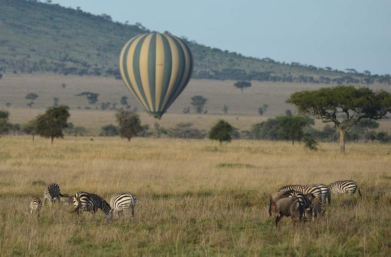 East Africa Safari 310.jpg