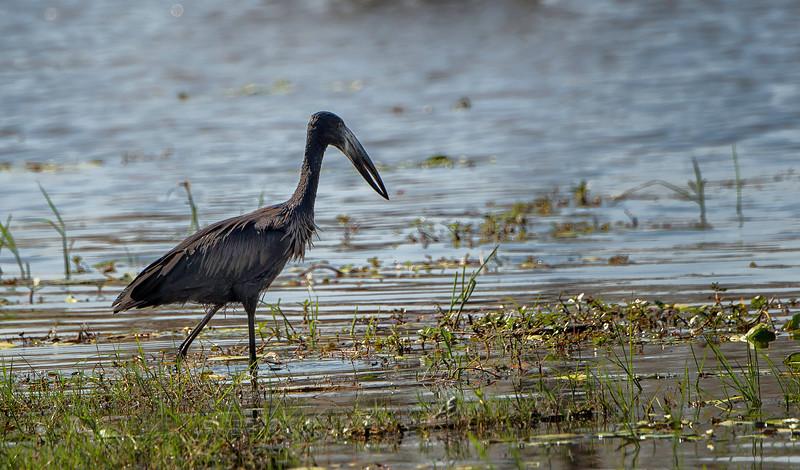2014-08Aug-Okavango Masters-29-Edit.jpg