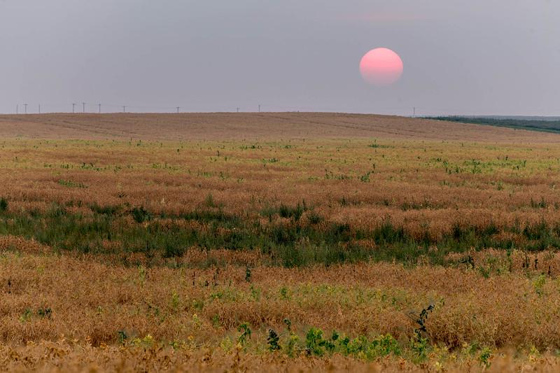 barley 46.jpg